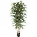 Bamboo potted 180cm height, green